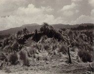 alvarez_bravo_landscape_with_grass